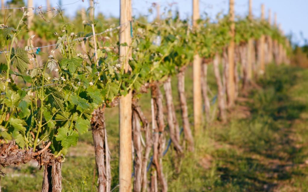 Lake Chelan Winery, Lake Chelan wine, things to do in lake chelan,
