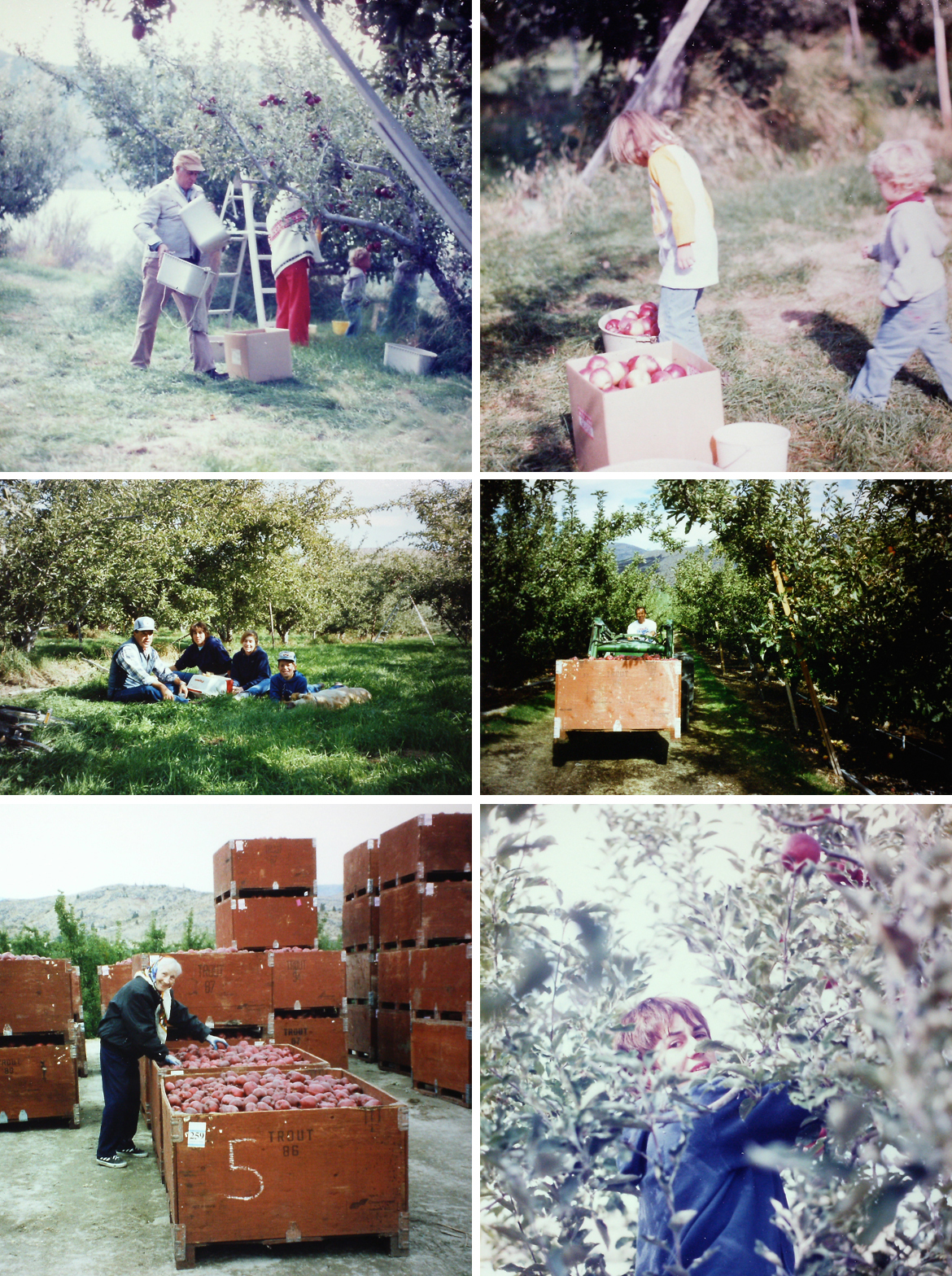 Lake Chelan Winery, Kludt Family Winery, lake chelan wine, things to do in lake chelan,