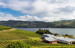 lake chelan winery, things to do in lake chelan, lake chelan wine tour,